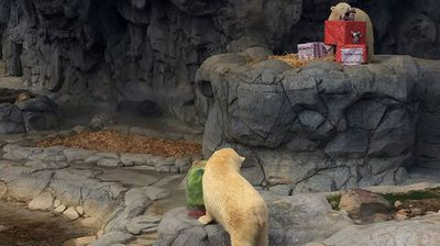 """We try to make it fun for him but it is also really fun for us to watch,"" said polar bear keeper Nasir Arop."