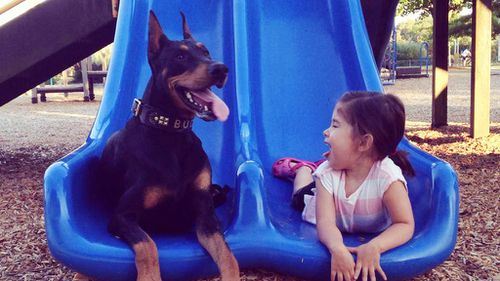 A girl's best friend: The toddler inseparable from her pet Doberman
