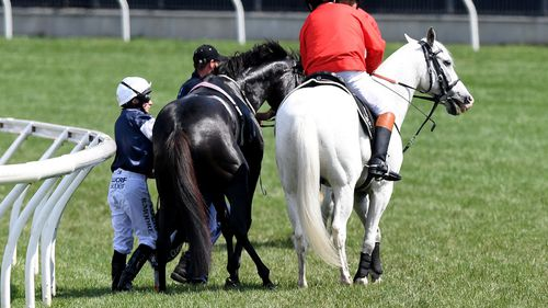Dr Fulton said the choice to euthanise a race horse trackside is not a veterinarian's first-choice option, but is done in the best interests of the animal's welfare, to spare it from further pain.