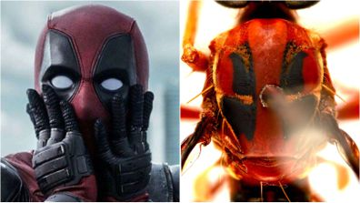 Deadpool insect
