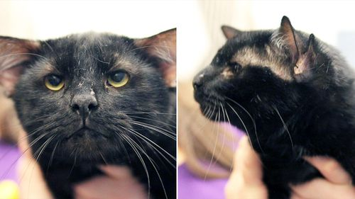 Four-eared shelter cat called 'Batman' finds new home