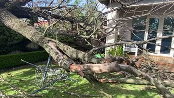 A large tree fell onto a home in the Adelaide suburb of Millswood this morning.