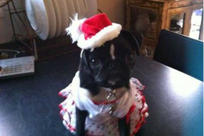 And the cutest pug award goes to....Princess Lola! Thanks Sally!