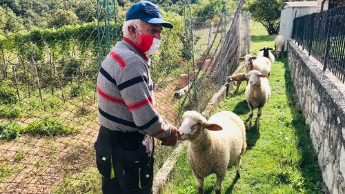 The pair's only other companions are Carilli's five sheep, as well as his truffle dog