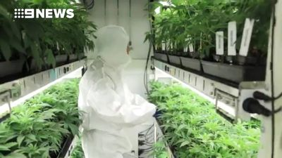 Australian medicinal cannabis company Creso Pharma enters lucrative Chinese market
