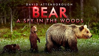david attenborough's bear: a spy in the woods