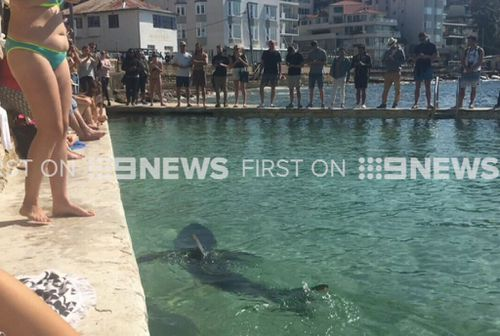 'Fluffy' spent yesterday afternoon in the Fairy Bower pools. (9NEWS)