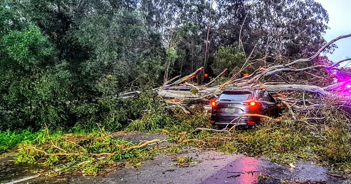 Hundreds of homes still without power a day after wild Sydney storms – 9News