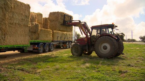 Farmer Ian Mudge said he would have to use his remaining hay to feed his ewes and lambs.