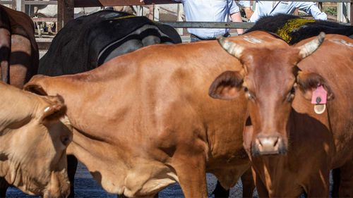 Meramist was suspended from importing beef into China overnight.