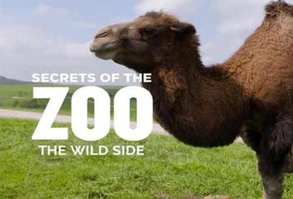 Secrets of The Zoo: The Wild Side
