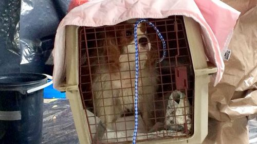 Pets of Ebola: Domestic animals falling victim to the deadly virus