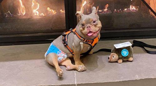 Jack special needs dog Jack Ohio