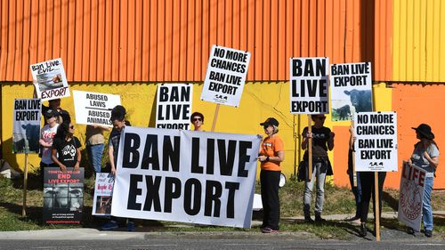 Live animal export protestors are seen near a shipping dock in Brisbane. (AAP)