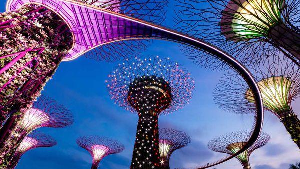 Singapore supertree at night