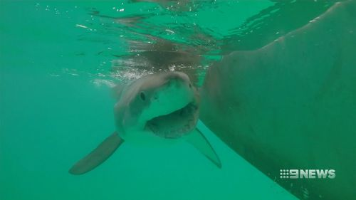 There have been 15 fatal shark attacks in West Australia since 2000. (9NEWS)