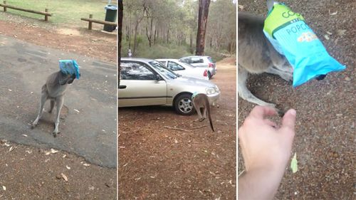 An unfortunate roo has run into the wheel of a car while attempting to free itself from a chip packet that became wrapped around its snout. (YouTube/Glenn Turner)