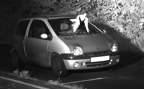 Pigeon saves speeding driver a ticket