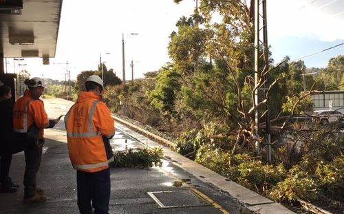A tree has fallen on the tracks at Glen Iris station, causing afternoon chaos on the Glen Waverley line. Picture: 9NEWS