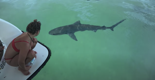 The 'inquisitive' shark circled the boat for an hour.