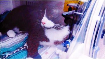 Felix the cat was trapped in the washing machine, slipping past his owner.