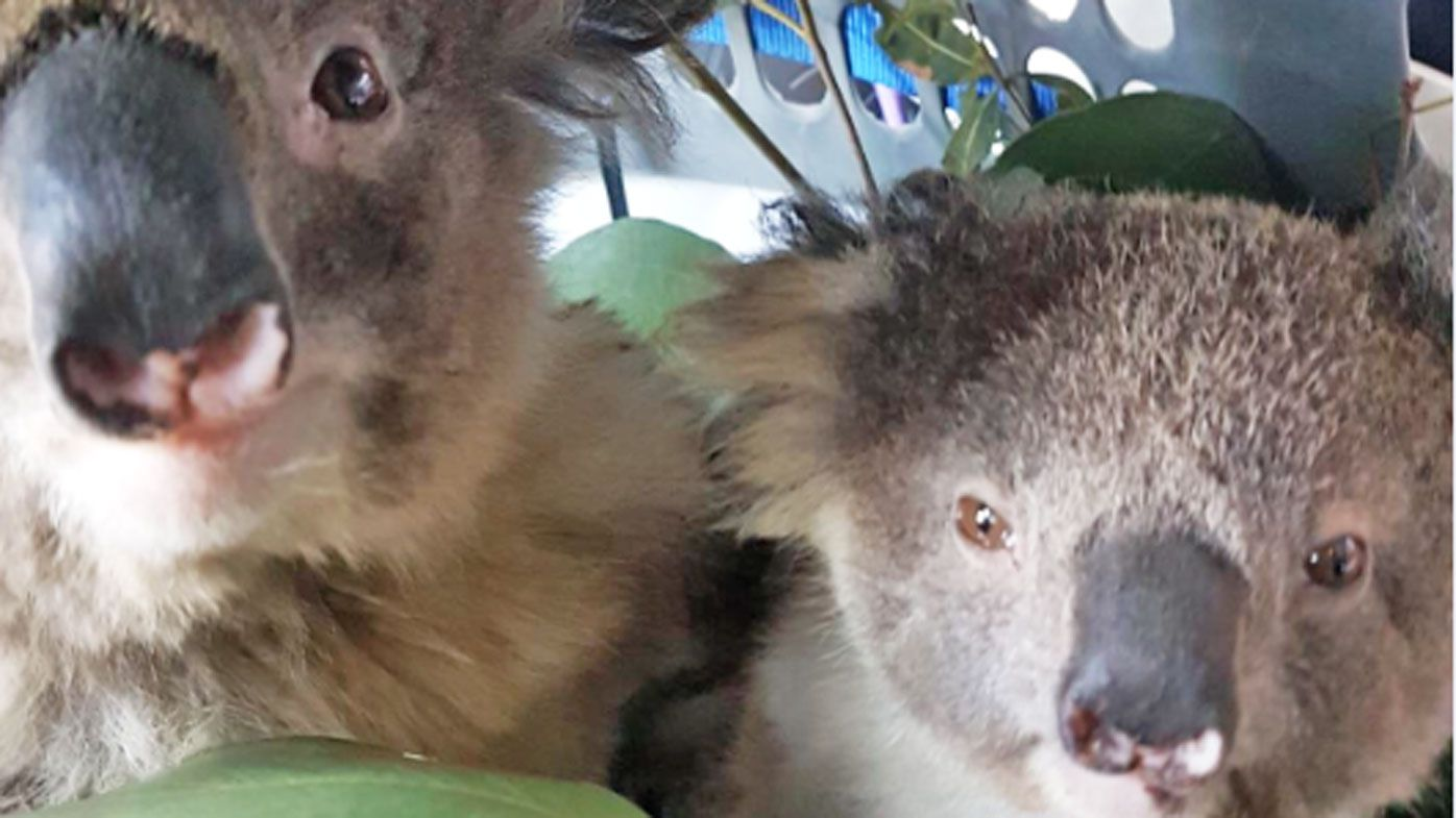 Animal rescue charity reassures donors money will help across Australia