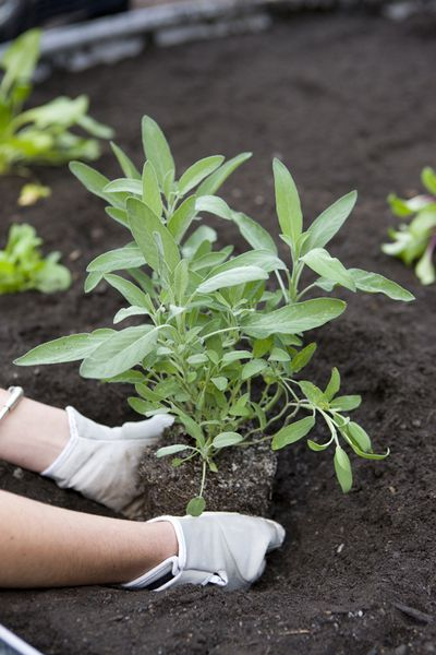 4. Sustainable gardening