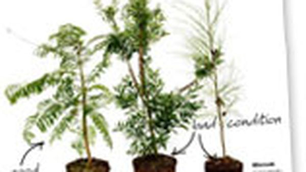 Growing trees: what you need to know