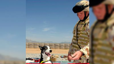 <p>Merlin died after being hit by a vehicle in Afghanistan in 2007. Here, he is pictured checking items at a local market.  </p>