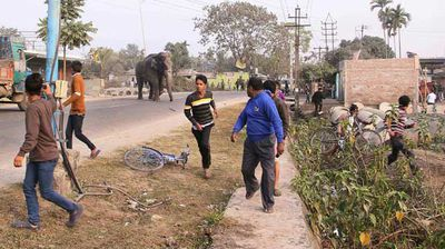 Residents scatter as the elephant enters the city. (AP)