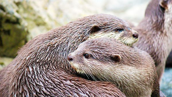 Image: Wellington Zoo Facebook