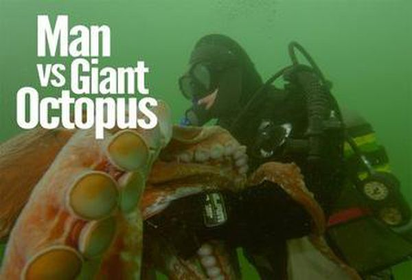 Man Vs Giant Octopus