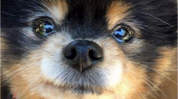 Police have arrested someone over an alleged dog-napping in Perth's northern suburbs last week.