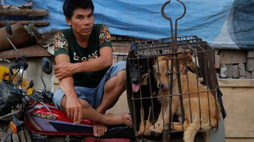 Chinese dog meat festival draws crowds despite global outrage