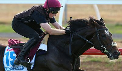 <p>Kingfisher (IRE)</p><p>Jockey Colm O'Donoghue</p><p>Trainer Aidan O'Brien</p><p>Barrier 9</p>