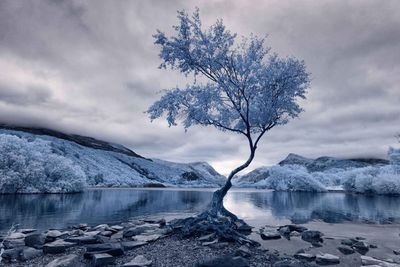 First Place, Infrared Landscape