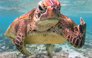 Rude turtle wins top prize at the 2020 Comedy Wildlife Photography Awards