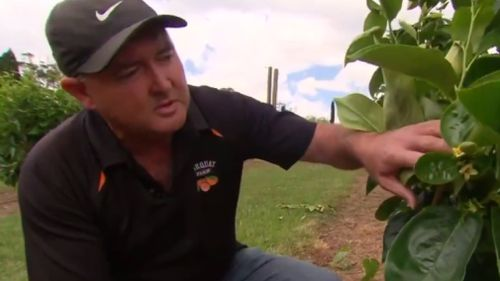 Northern Sydney farmer Warren Waddell. (9NEWS)