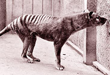 Daily Quiz: 'Benjamin', the last known thylacine, died in which zoo?