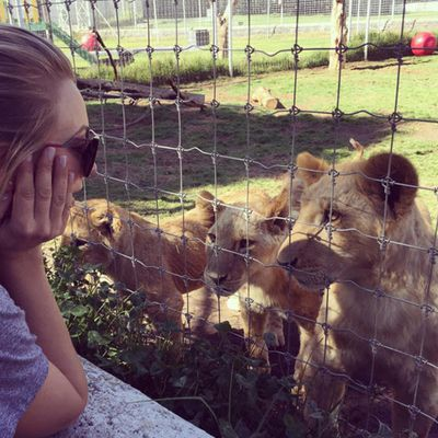 Kaley meets lion friends El Generalito, Acapulco and Gustavo
