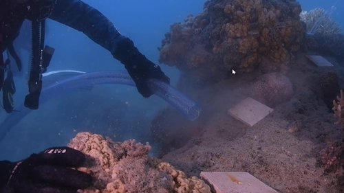 Researchers deplo coral larvae onto a damaged section of the reef at Hook Island in the Whitsundays.