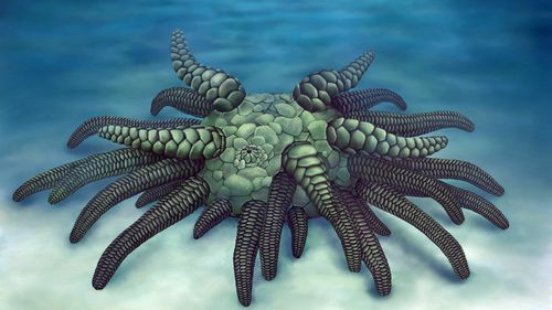 Scientists discover 430 million-year-old 'Cthulhu' fossil