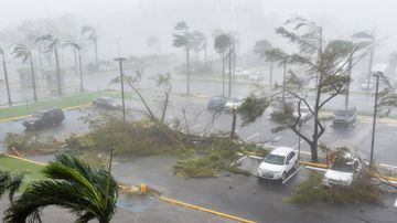 Trees are toppled in a parking lot at Roberto Clemente Coliseum in San Juan, Puerto Rico. (AFP)