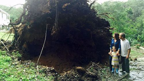 Liberal MP Lucy Wicks' home became water damaged after an 80m blackbutt tree crashed into the roof during a storm.