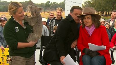 Karl Stefanovic cuddles babies, hides from 'randy' koala on TODAY