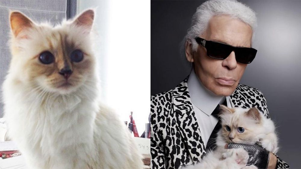 Karl Lagerfeld's cat first to receive game-changing Dyson hairdryer