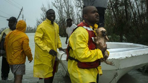 A volunteer looks for the owner of a dog he rescued from the rising waters of Hurricane Dorian, on a flooded road near the Causarina bridge in Freeport, Grand Bahama.