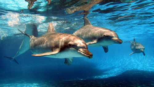 The recently rebranded Dolphin Marine Conservation Park announced today that it no longer intends to breed its dolphins in line with the future direction of the organisation.