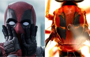 Newly discovered insects named after Marvel characters
