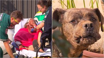 Dog attack news headlines